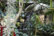 Internationale Orchideenschau @ Blumengärten Hirschstetten: vom 15.-23.02.2014 trotzen tausende Blüten dem kalten Winter