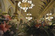 Ein Meer aus 100.000 bunten Blüten im Wiener Rathaus. Foto: Kromus / PID